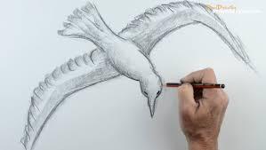 pencil sketches of birds in sky best 20 bird sketch ideas on