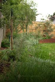 era nurseries buy trees online wholesale australian native 379 best australian native gardens images on pinterest