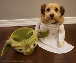 Halloween Costumes Yorkies Princess Leia Yourdesignerdog
