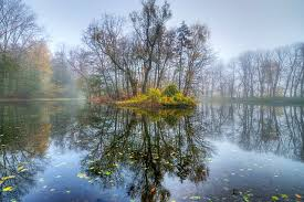 cool trees lake lake cool trees images background hd 16 9 high definition