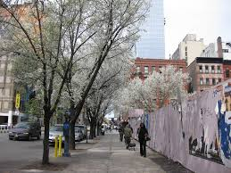 here are some fun facts about new york city u0027s trees village voice