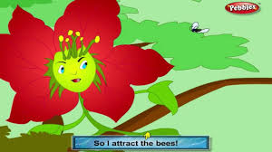 poinsettia rhyme flower rhymes for children nursery rhymes for