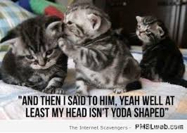 Funny Yoda Memes - 26 funny yoda shaped cat meme pmslweb
