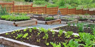 how to start a vegetable garden for beginners how to start a vegetable garden bunnings warehouse