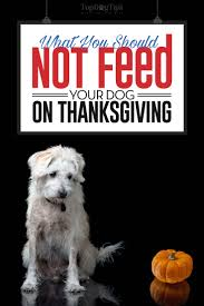 what not to feed your dogs on thanksgiving when it s dinner time