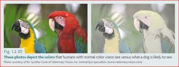 Are Dogs And Cats Color Blind Can Dogs See Color U0026nbsp And How Do We Know U2013 Dr Sophia Yin
