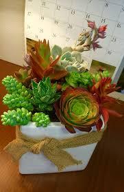 succulent arrangement for the office design by ana calderon