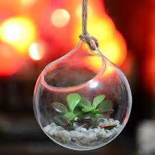 glass globe hanging terrarium kit money plant