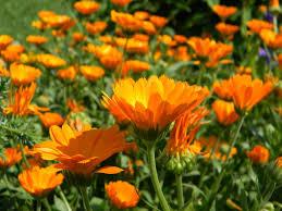 flowers for the vegetable garden