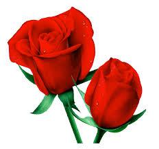 imagenes para enamorar con flores 2 hechizos con agua para enamorar la brujería blanca