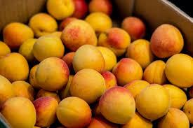 fruit fresh free photo apricot fruit fresh food free image on pixabay