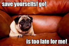 Funny Pug Memes - pug memes funny peg memes cute pug memes images