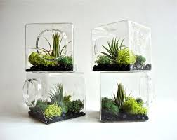 Plant Home Decor by Stackable Living Eco Cube Modern Air Plant Glass Terrarium Cube