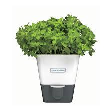 Self Water Pot Self Watering Herb Pot 49 Inspiring Style For Eva Solo Self