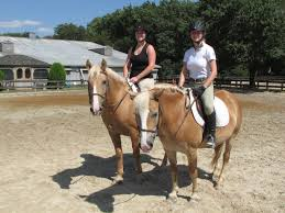 halloween city laurel md columbia horse center horse lessons riding lessons u0026 camps