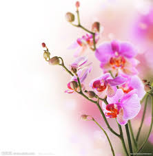phalaenopsis amabilis picture more detailed picture about flower