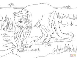 south american cougar coloring page free printable coloring pages