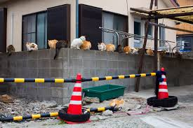 welcome to u0027cat island u0027 where felines outnumber humans 5 to 1