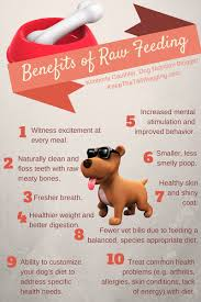 infographics on raw feeding for dogs keep the tail wagging