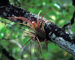 olivia yapen rainforests scribble maps