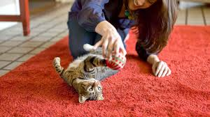 science diet cat food healthy cat food hill u0027s pet