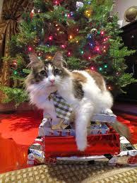 1099 best santa paws images on pinterest christmas