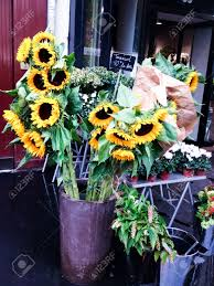 sunflowers for sale sunflowers for sale in flower shop in on rainy day stock