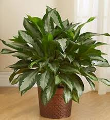 low light indoor plants top selected products and reviews