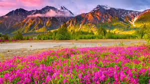 most beautiful scenery wallpapers that you will simply love
