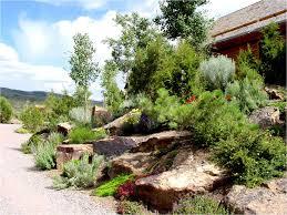 landscape design photo gallery colorado alpines u0026 wildflower farm