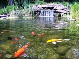 backyard pond waterfall 1000 images about backyard ponds on