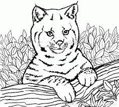 coloriage dessin tigre de tigre blanc gratuit dessincoloriage