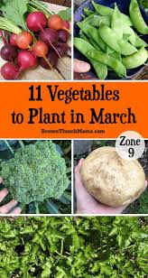 How To Store Garden Vegetables For Winter 6222 Best Best Gardening Tips From Gardeners Images On Pinterest