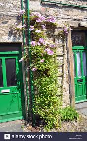 flowers growing up a trellis in a street in settle stock photo