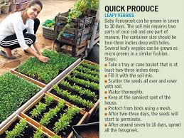 kitchen garden ideas sow tips to build your own kitchen garden lifestyle