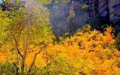 fall color autumn color yellows posts colors
