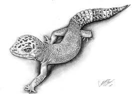 drawn reptile gecko pencil and in color drawn reptile gecko