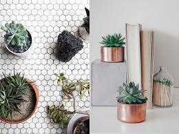 best indoor house plants interior small indoor house plants wellsuited tree miniature