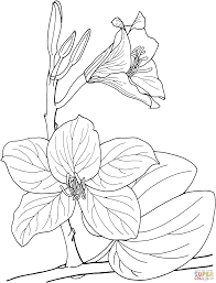 orchid coloring pages free coloring pages