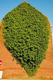 unusual plants rare climbing plant by devosvictor photography