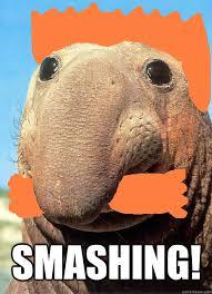 Smashing Meme - smashing nigel elephant seal quickmeme
