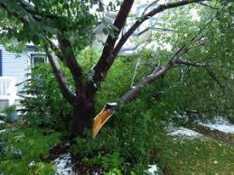 krl tree service tree repair