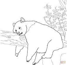 giant panda coloring page free printable coloring pages