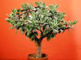 indoor plants that don t need sunlight best indoor plants that doesn t need too much sunlight