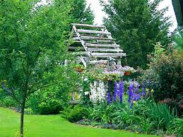 summer backyard cottage with delphinium u2013 start a easy flower
