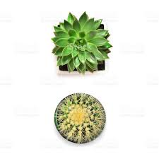 top view succulent and cactus on white background stock photo