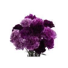types of purple purple flowers carnations mix set carnations types of flowers