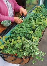 herb garden window box herb garden by vegetable gardener herbs