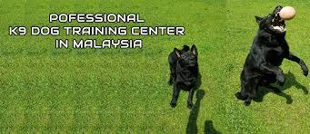 belgian shepherd malaysia land of german sheperd dogs in malaysia kuala lumpur kajang