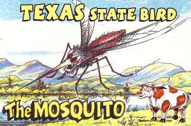 my favorite funny postcards mosquito as state bird of texas